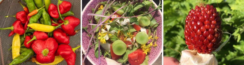 Gemüsebeet Planer von @gartengarten