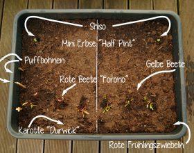 Aussaat Balkon Gemüse Garten